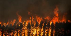 Alberi che bruciano. Incendi in Australia