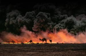 Durante gli incendi molti animali sono rimasti feriti