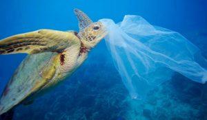 Le tartarughe sono tra i soggetti più a rischio a causa della plastica nei mari